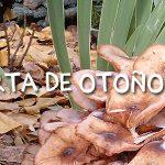 ¡Oferta de otoño en Masía El Molinete!