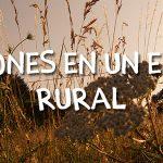 Vacaciones en un entorno rural: un verano distinto