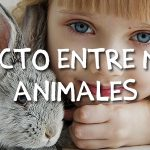 beneficio-niños-animales