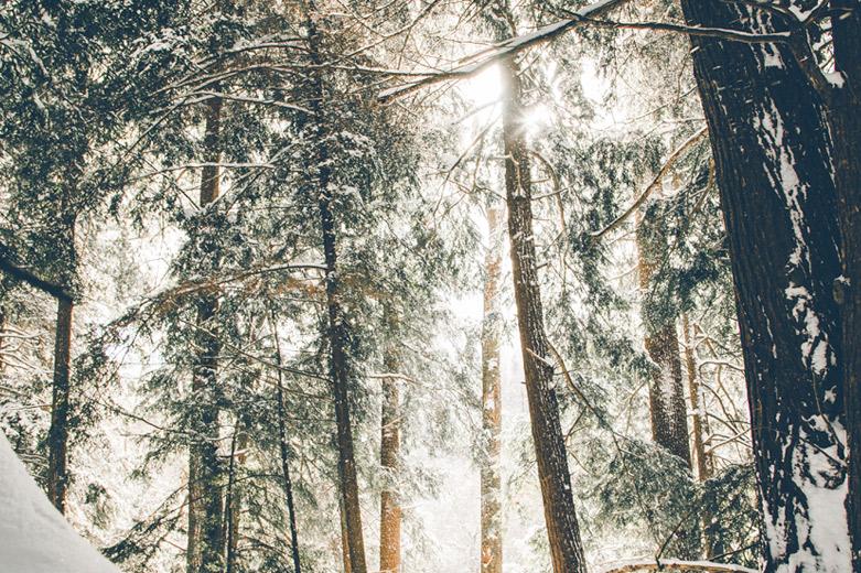oferta de invierno