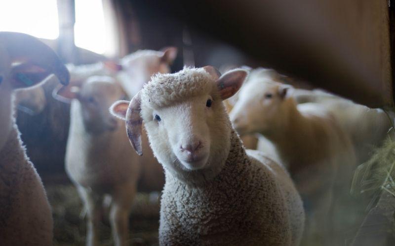 Casa rural con granja: Descubre Masía El Molinete