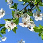 Oferta primavera – verano 2021 Masía El Molinete
