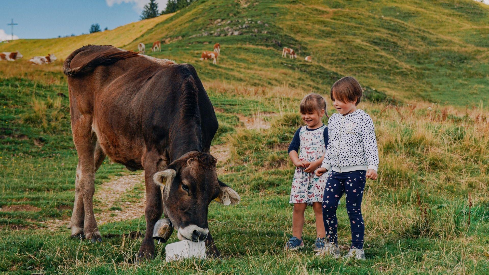 Vacaciones en granjas con animales