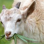 Organiza tus vacaciones en granjas con animales