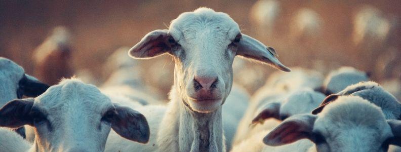 fin de semana en hotel rural con animales de granja